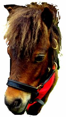 JAMO Ponyclub